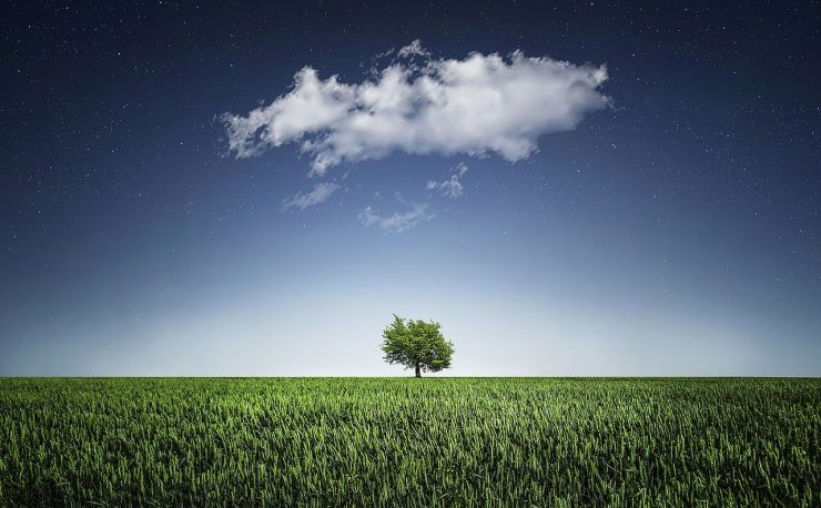 Tree with cloud